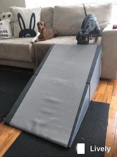 rampa para cachorros no sofá