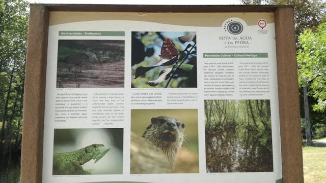 Fauna e Flora da Praia da Folgosa no Rio Paiva