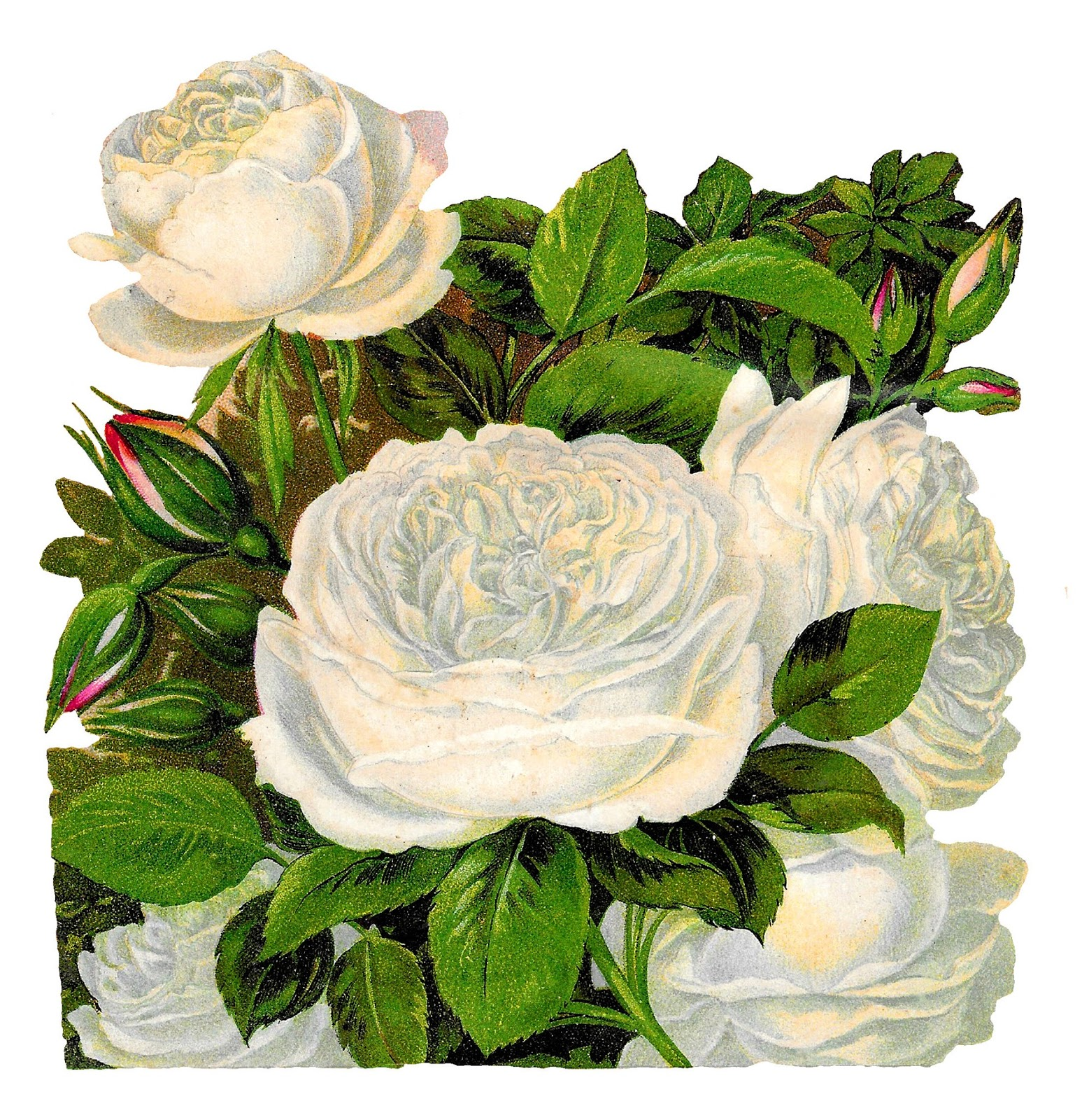 Antique Images: White Rose Image Transfer Flower Clip Art ...