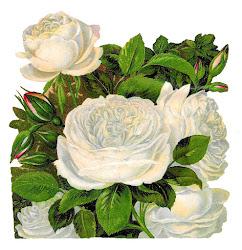 rose flower clip illustration transfer roses clipart artwork botanical antique catalog paper victorian
