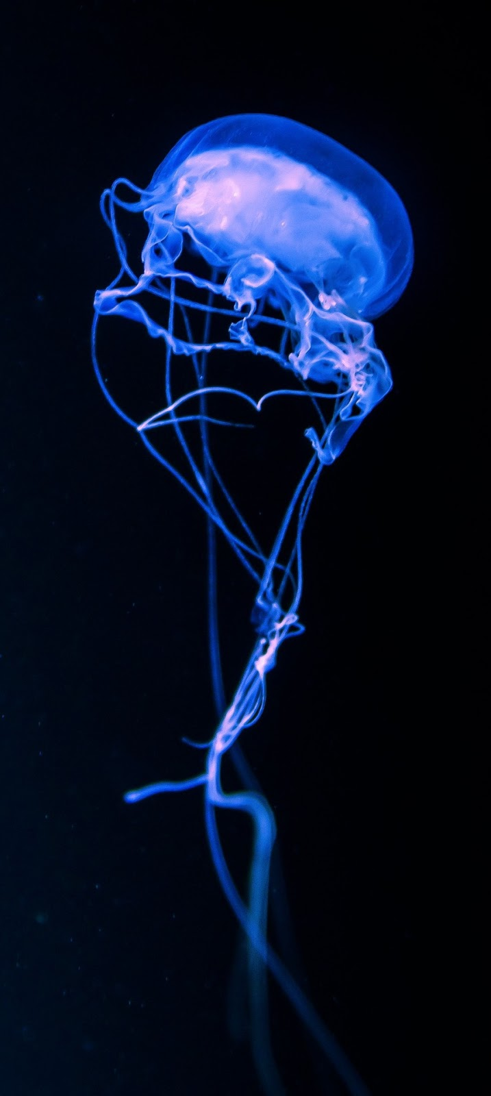 A jellyfish with an artistry shape.