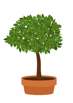 Bonsai Elm Tutorial