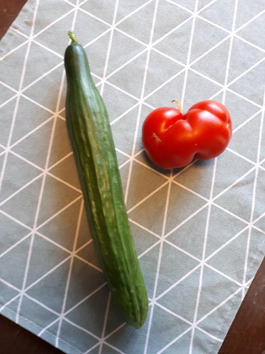 tomaatti kasvihuonekurkku
