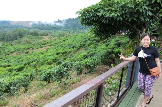 Sabah Tea  Kundasang, Ranau