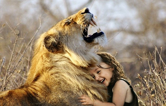 Gadis kecil yang bermain dengan seekor singa