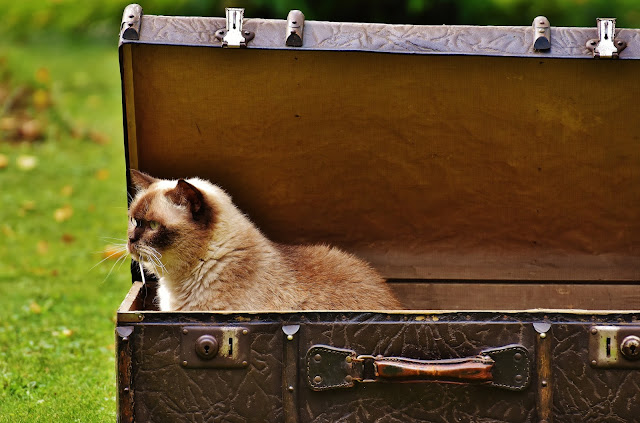 Cat%2Bin%2Bd%2Bbox - What Is The Perfect Family Pet For You?