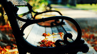 Brown Leaves on Bench Autumn Landscape HD Wallpaper