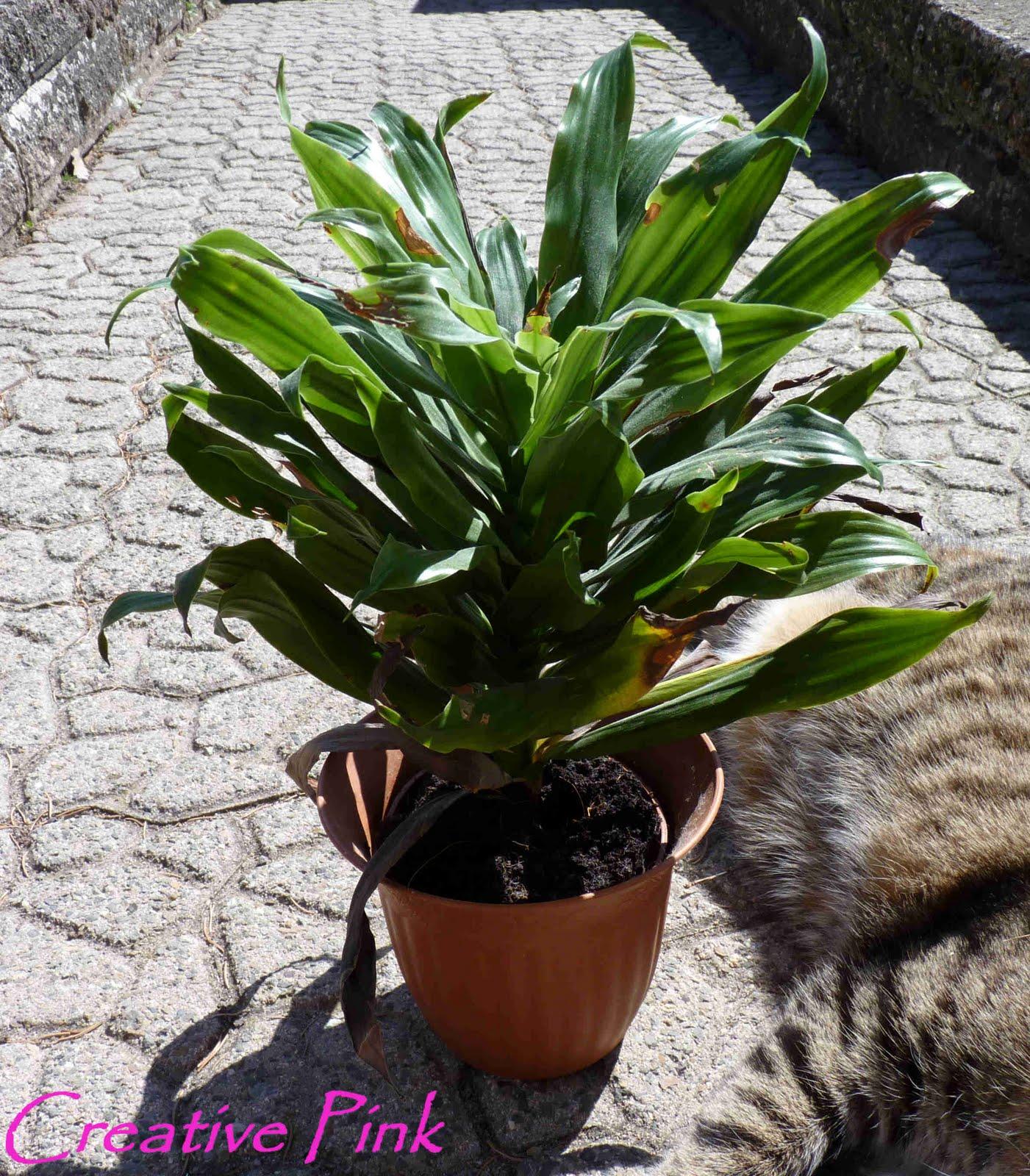 pflanze mit g pflanze gefunden hnlichkeit mit efeu gundermann pflanzen botanik bestimmung. Black Bedroom Furniture Sets. Home Design Ideas