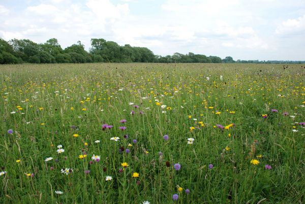 Traditional haymeadow. Photo copyright Jon Valters (All Rights Reserved)