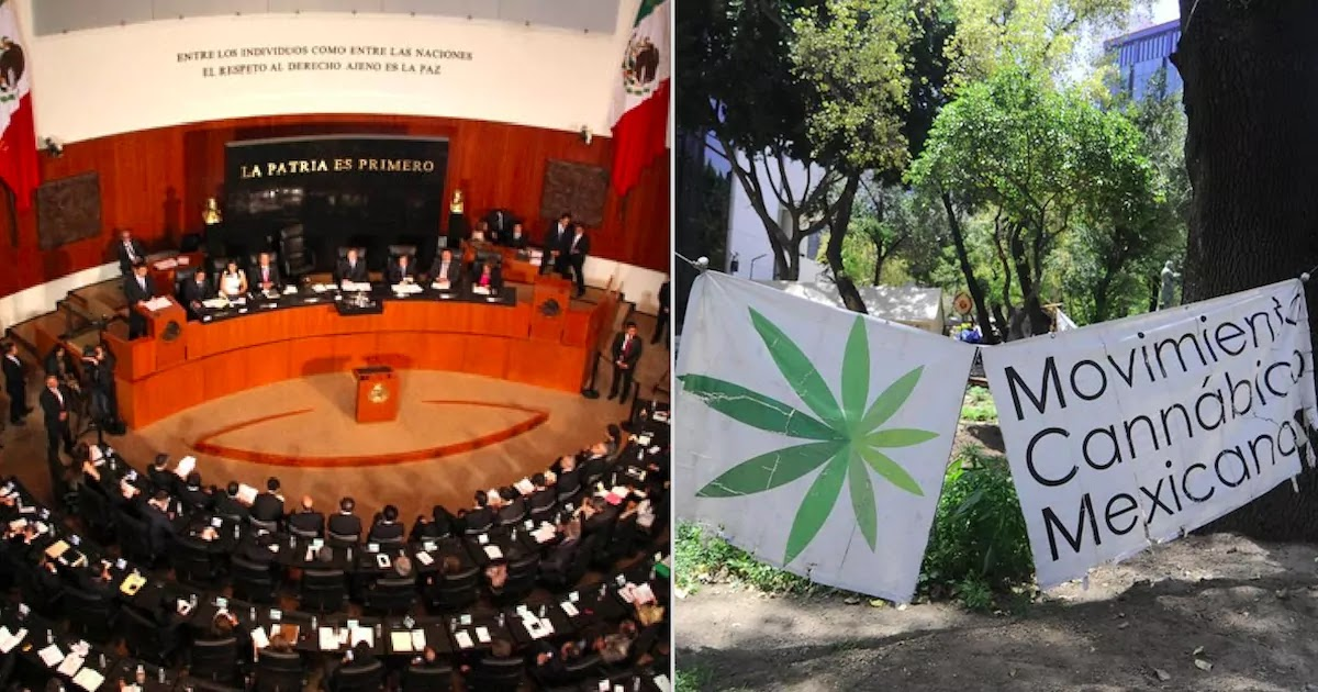 Mexico's Senate Has Voted To Legalise Marijuana In An Effort To Crackdown On The Drug Cartels