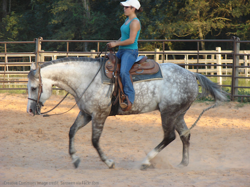 quarter horse show western pleasure