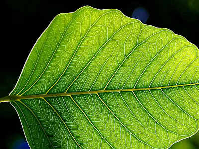 Célula vegetal o de las plantas