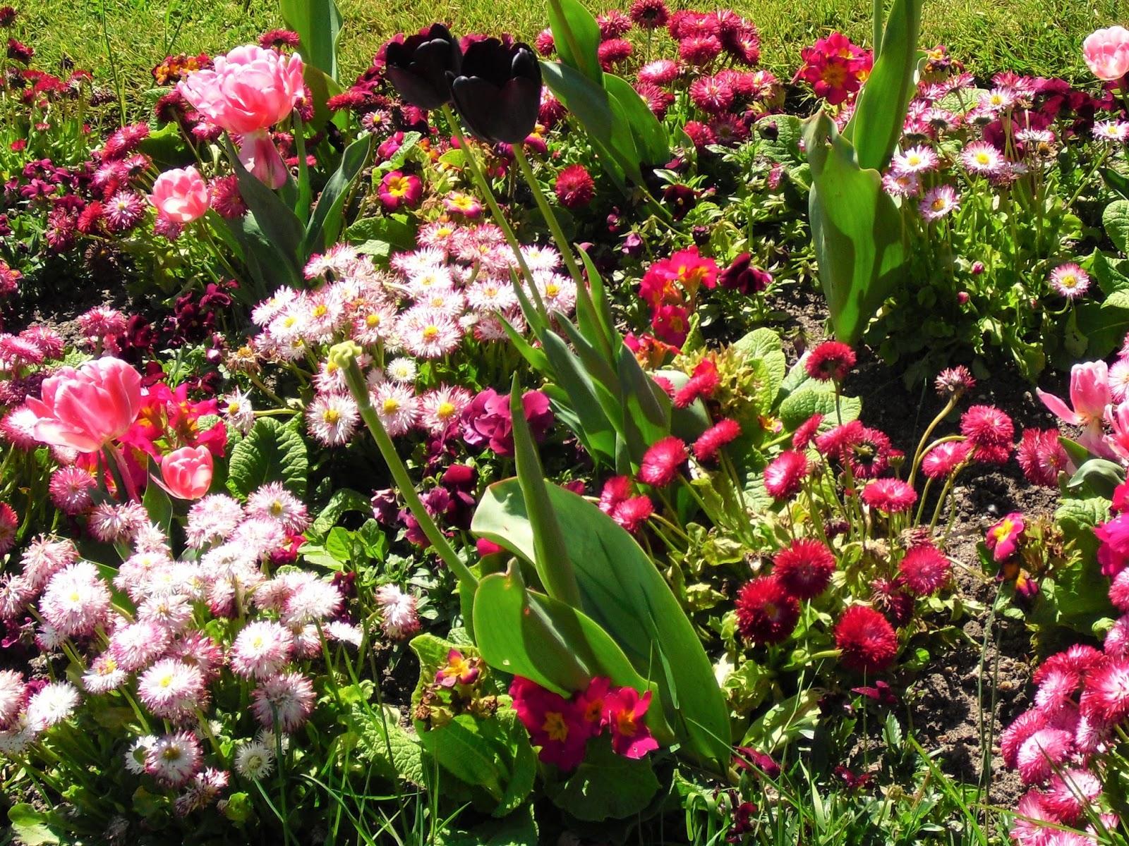 Mon petit jardin en Sologne Le ch¢teau de Chenonceau et ses jardins