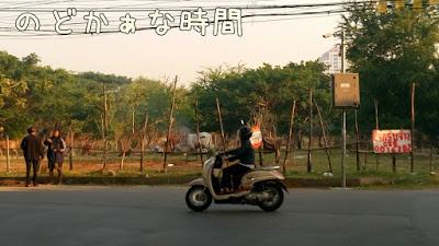 バンコクの放牧