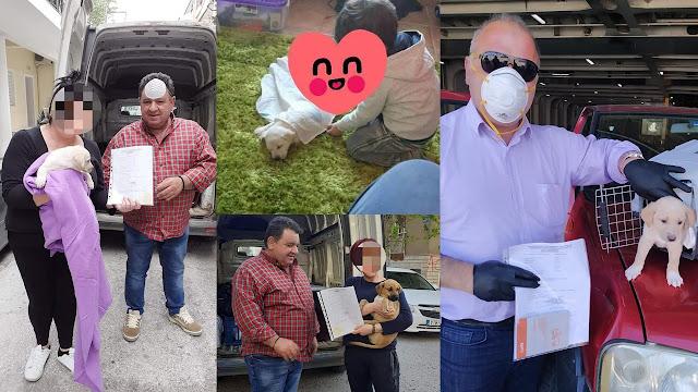 4 μικρά κουταβάκια από το Ναύπλιο βρήκαν τις οικογένειες που τους αξίζουν