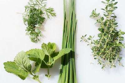 herbs for treatment of Alzheimer disease