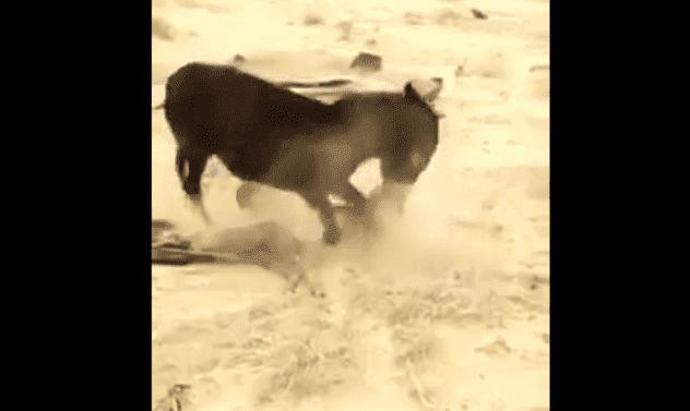 بالفيديو ردة فعل عنيفة لحمار ينتقم من ذئب إفترس ابنه!