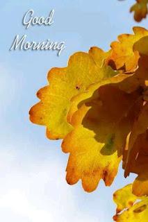 শুভ সকাল ফুলের ছবি | শুভ সকাল পিকচার | শুভ সকাল এসএমএস | শুভ সকালের ছবি | শুভ সকাল পিকচার ডাউনলোড