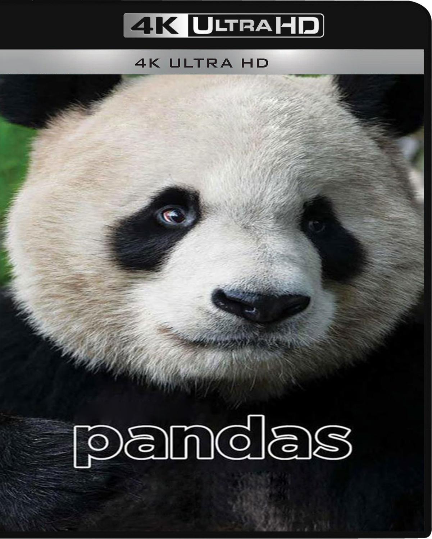 Pandas [2018] [UHD] [2160p] [Latino]