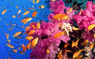 Coral reef fish 10