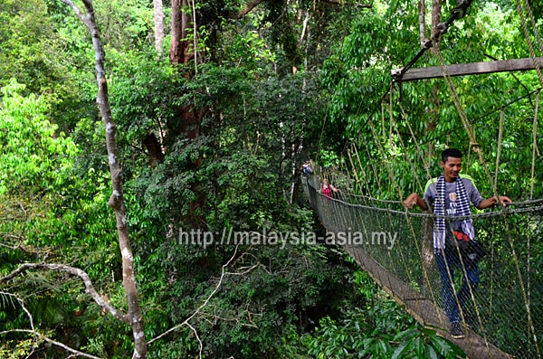 Worlds longest canopy walk