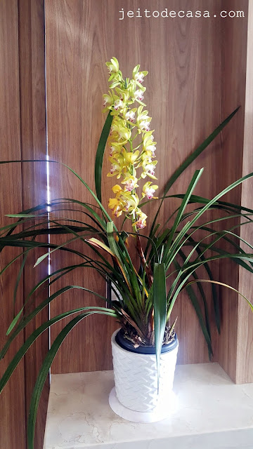 cymbidium-decor