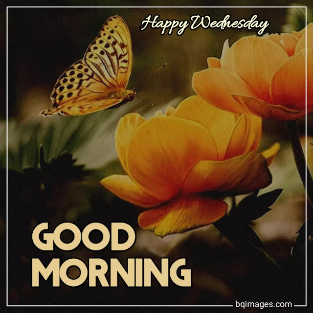 good morning wednesday images for whatsapp