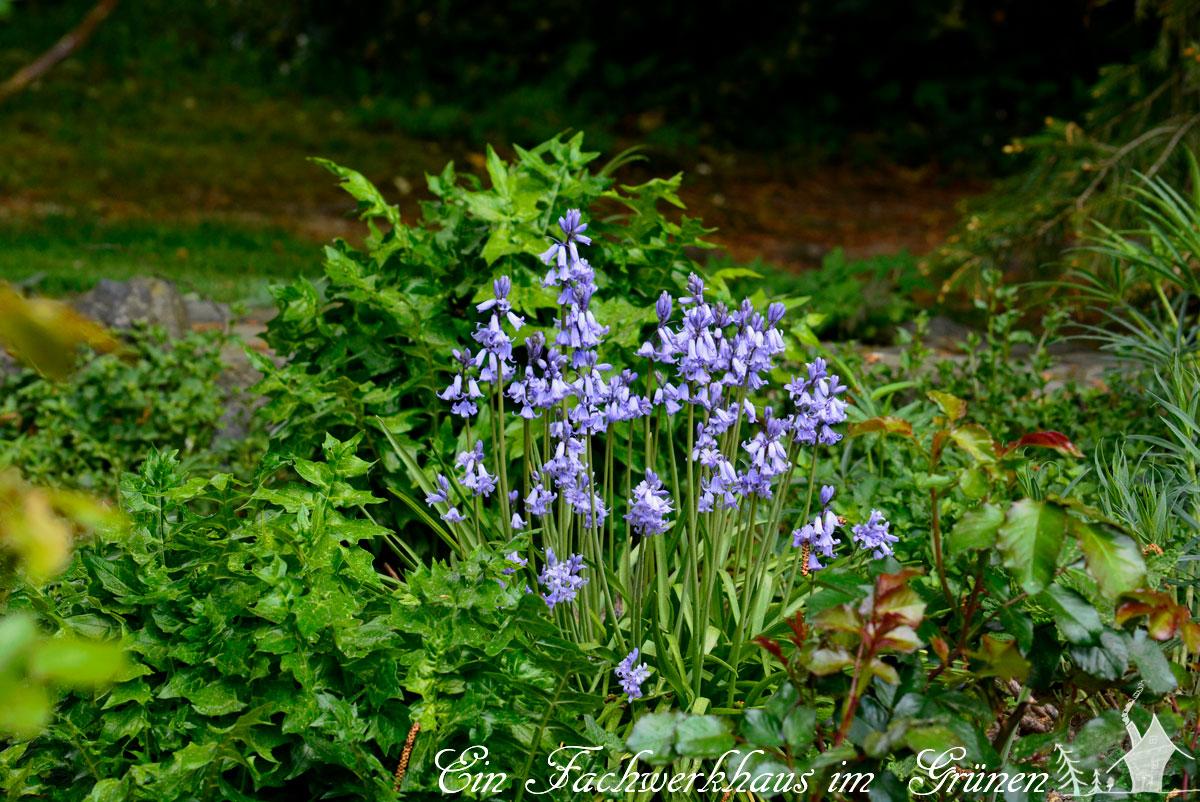Hasengloeckchen, Gartenblog