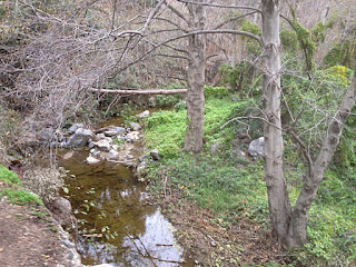 Riparian setting along Fish Canyon Trail, Angeles National Forest