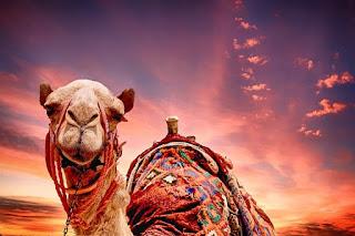 Develer Hakkında ilginç Bilgiler ile ilgili aramalar Develer hakkında ilginç bilgiler  Develerin özellikleri  Çöl devesi  Devenin kaç tane memesi var  Devenin çölde yaşamak için özellikleri  Kur'an'da deve öldürmek  Deve ile ilgili ayetler  Hecin devesi özellikleri