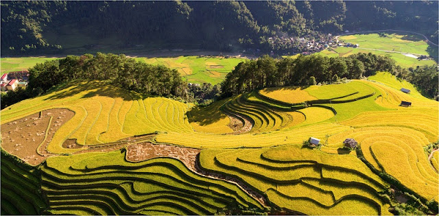 Now is the best time to see terraced rice fields in Mu Cang Chai, Vietnam 4
