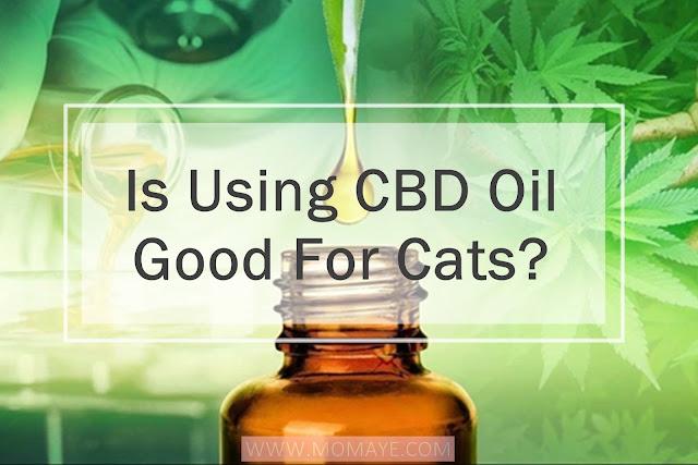 pets, CBD Oil, health, pet care, cats