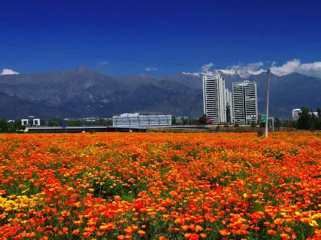 Primavera no Chile