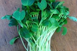 Manfaatkan berkebun di rumah dengan menanam sayuran hijau seperti microgreen