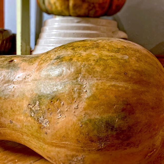 large butternut squash
