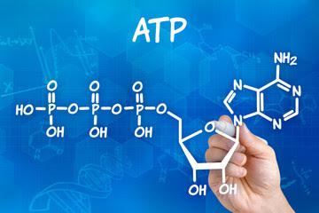 Bagaimana ATP Terbentuk?