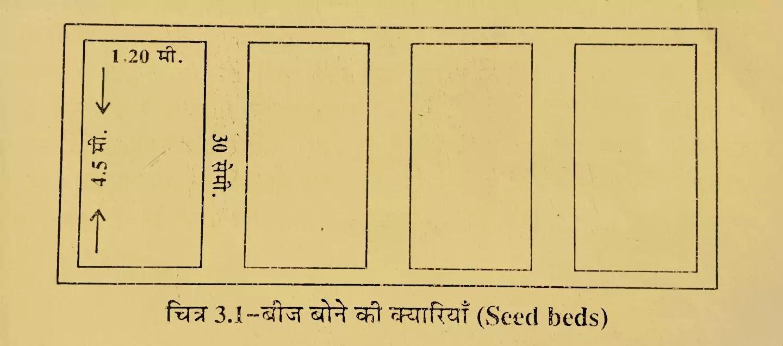 बीज शैय्या की तैयारी ( Preparation of Seed Beds ), बीज बोने की क्यारियां