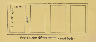 बीज शैय्या की तैयारी कैसे करें पूरी जानकारी हिंदी में, नर्सरी में बीज शैय्या की तैयारी कैसे करें, बीज की पंक्तियों की तैयारी कैसे करें, पौधों का रोपण