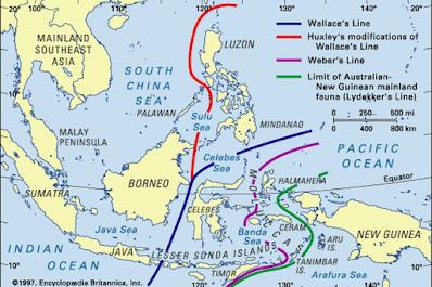 garis khayal yang memisahkan fauna indonesia bagian barat dan wilayah peralihan