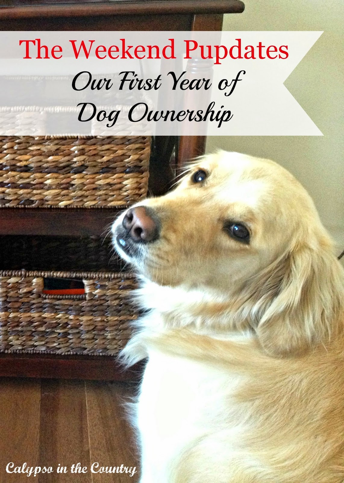 The Weekend Pupdates - Our first year of dog ownership with a golden retriever.