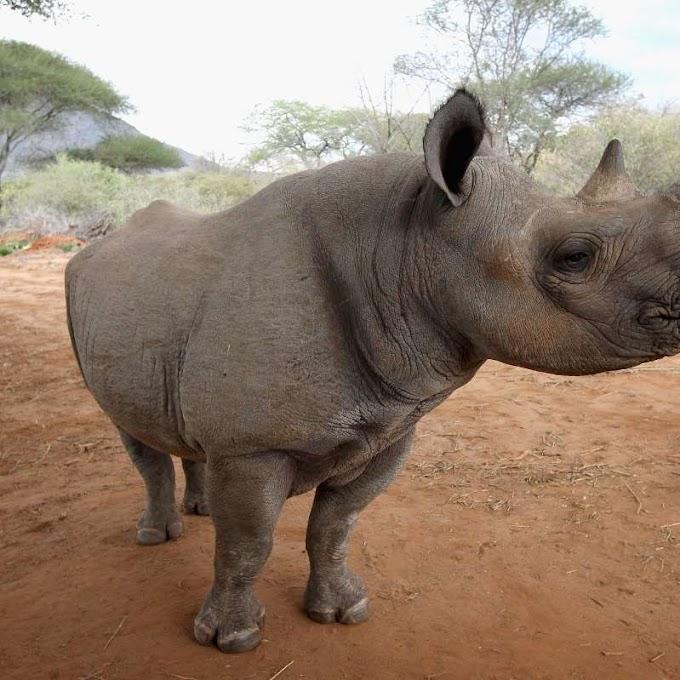 World's oldest rhino dies at sanctuary in Tanzania
