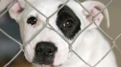 Moja wizyta w schronisku. Rasowe psy kochają bardziej?