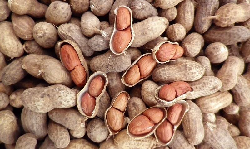 Thành phần dinh dưỡng của hạt Đậu Phộng