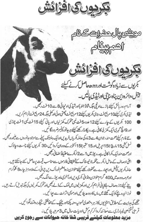 Goat Breeding Tips for Livestock Farmers (Urdu