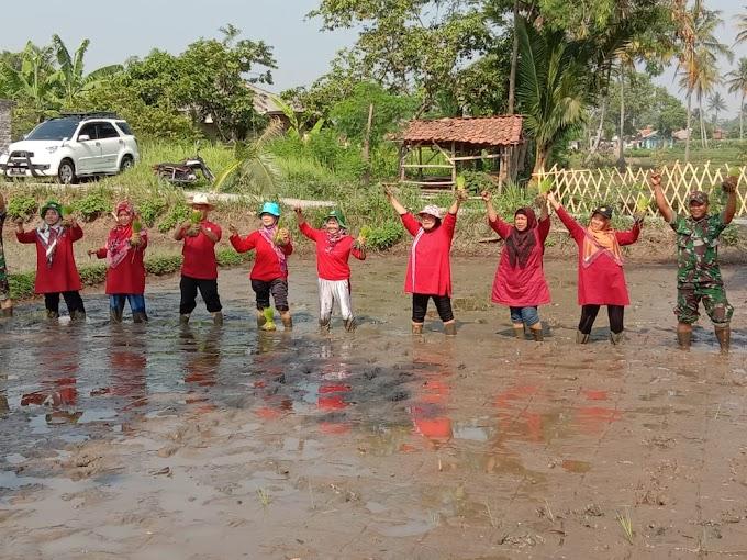 Kegiatan Tanam Demarea di Kecamatan Karangtengah