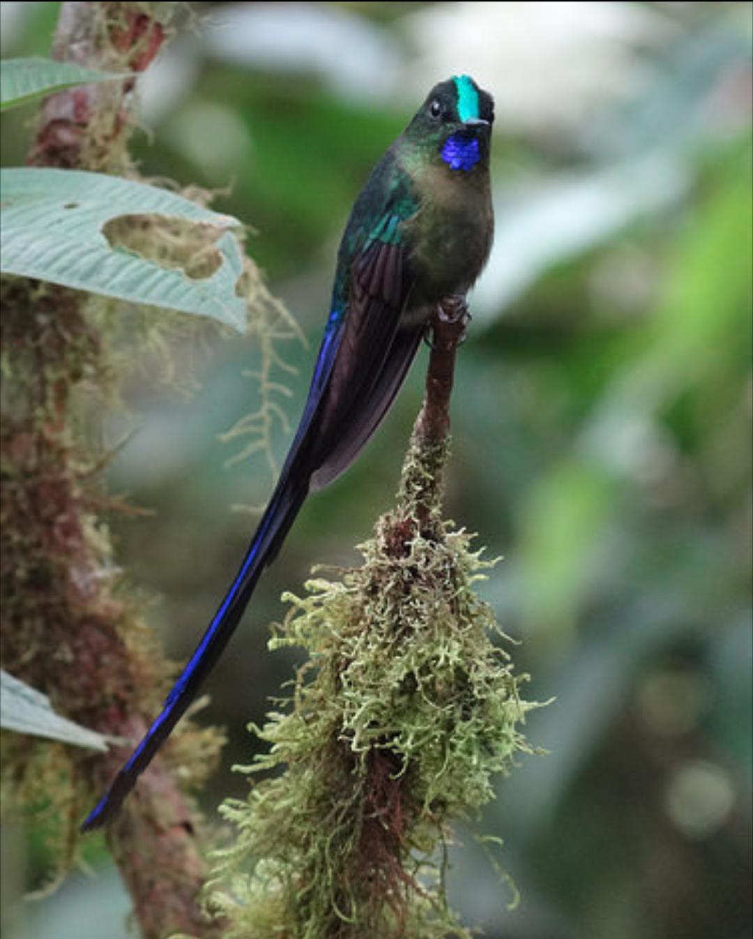 Suara Burung Kolibri Manggar : suara, burung, kolibri, manggar, Categories, Fasrland