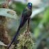 Burung Kolibri, Burung terkecil di dunia dan penerbang cepat