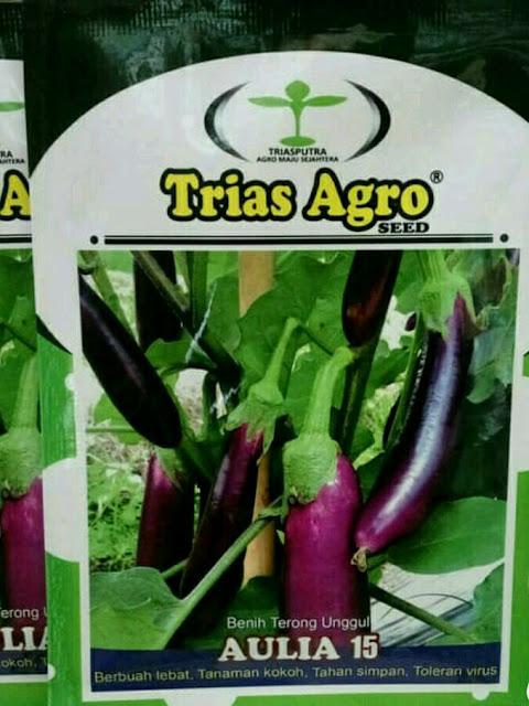 Benih Terong Ungu AULIA 15 Produk TRIAS AGRO SEED
