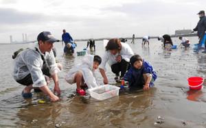 富津海岸潮干狩り場オープン
