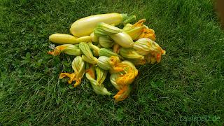 Blüten vegetarisch gefüllte Zucchiniblüten Rezept